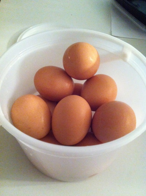 bucket of eggs